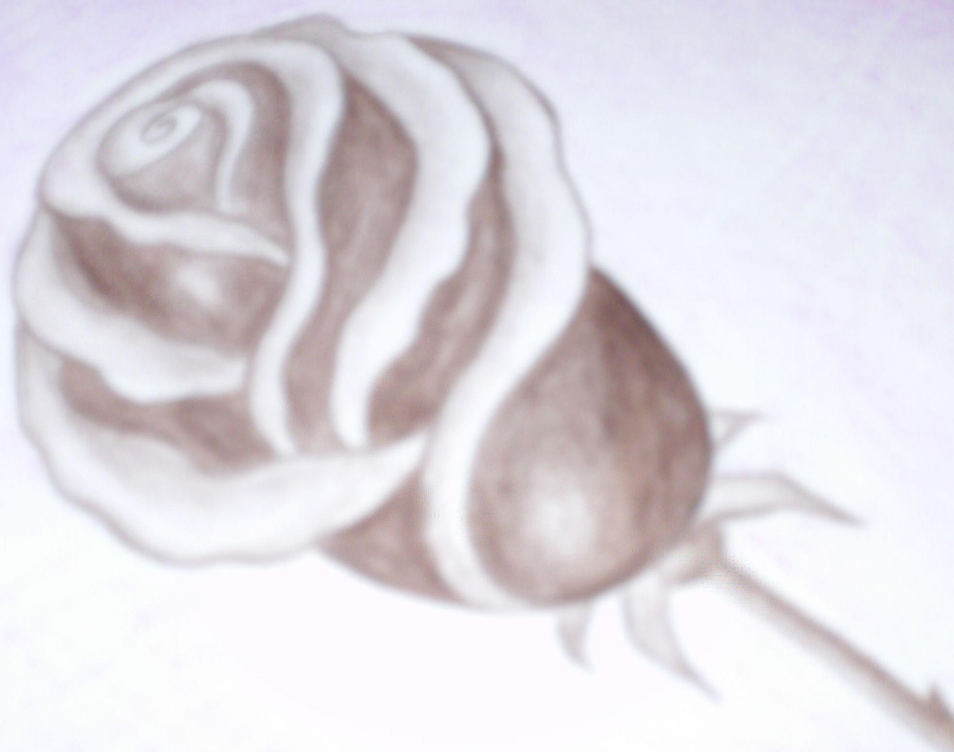 Dark 'Rose'