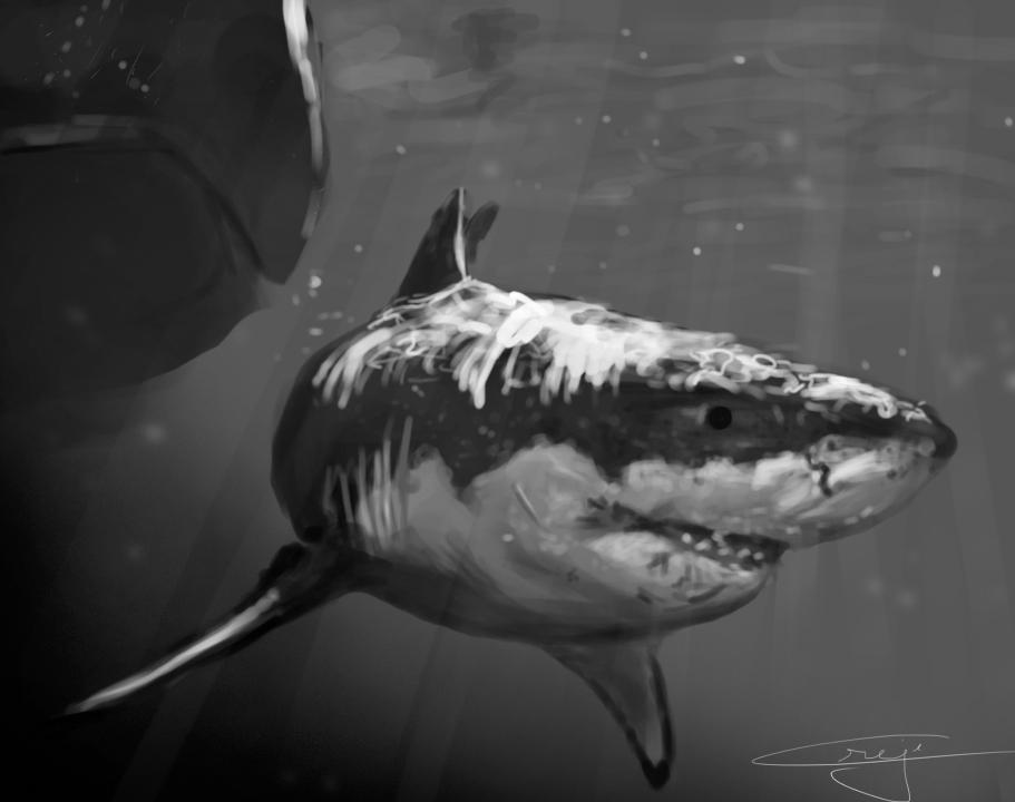 shaded shark