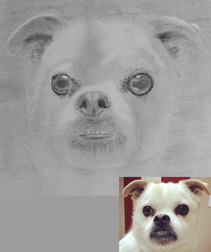 A precious pup