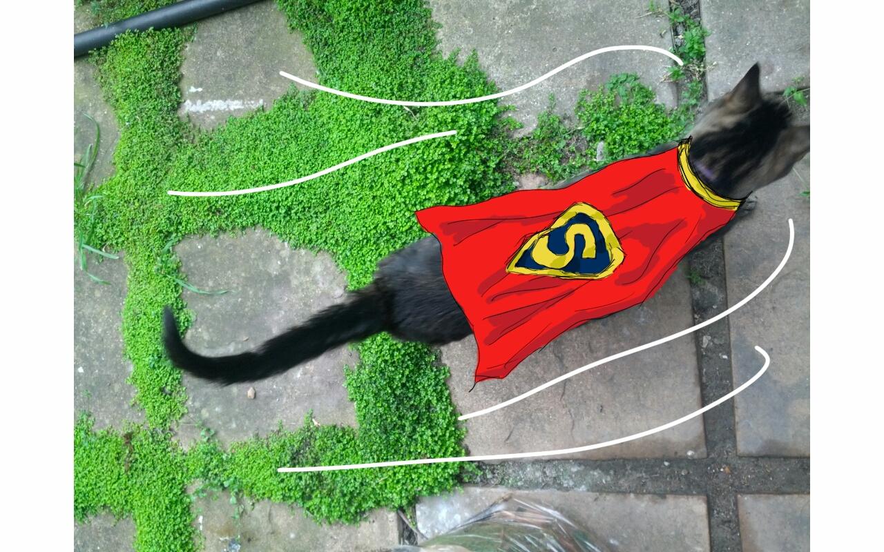 Super Kitteh!