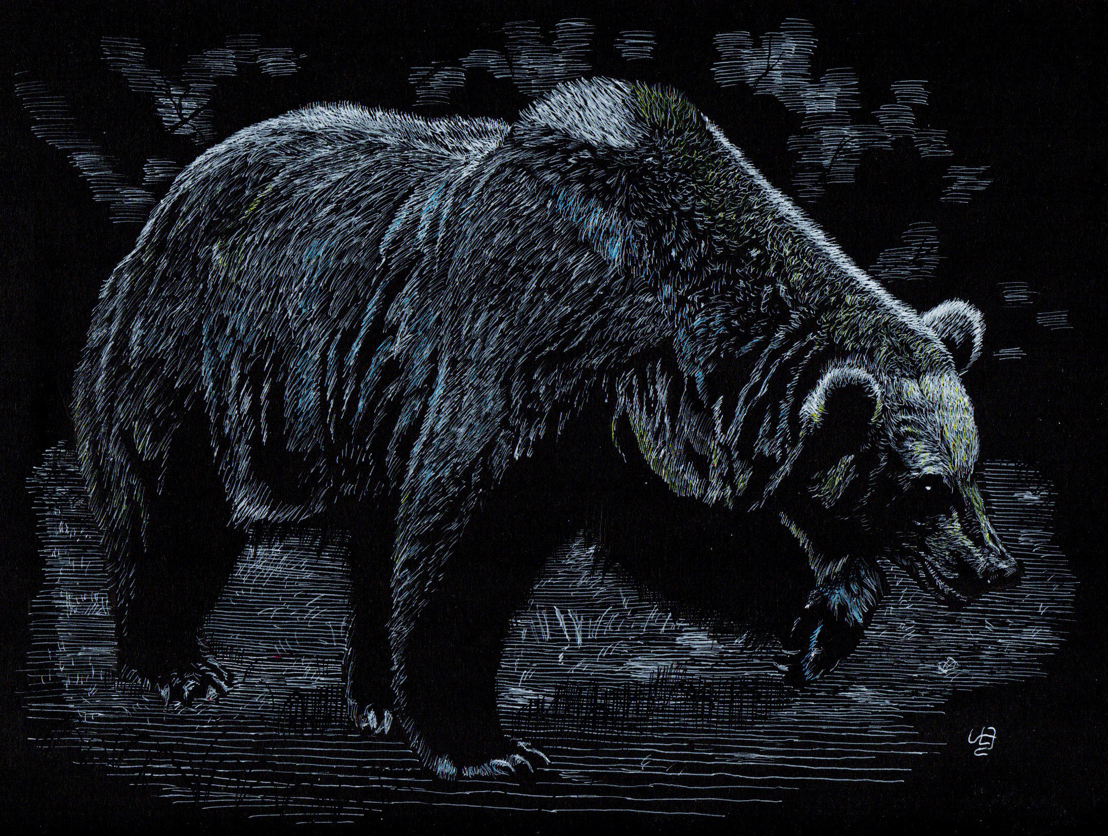 Bear In The Deep Forest