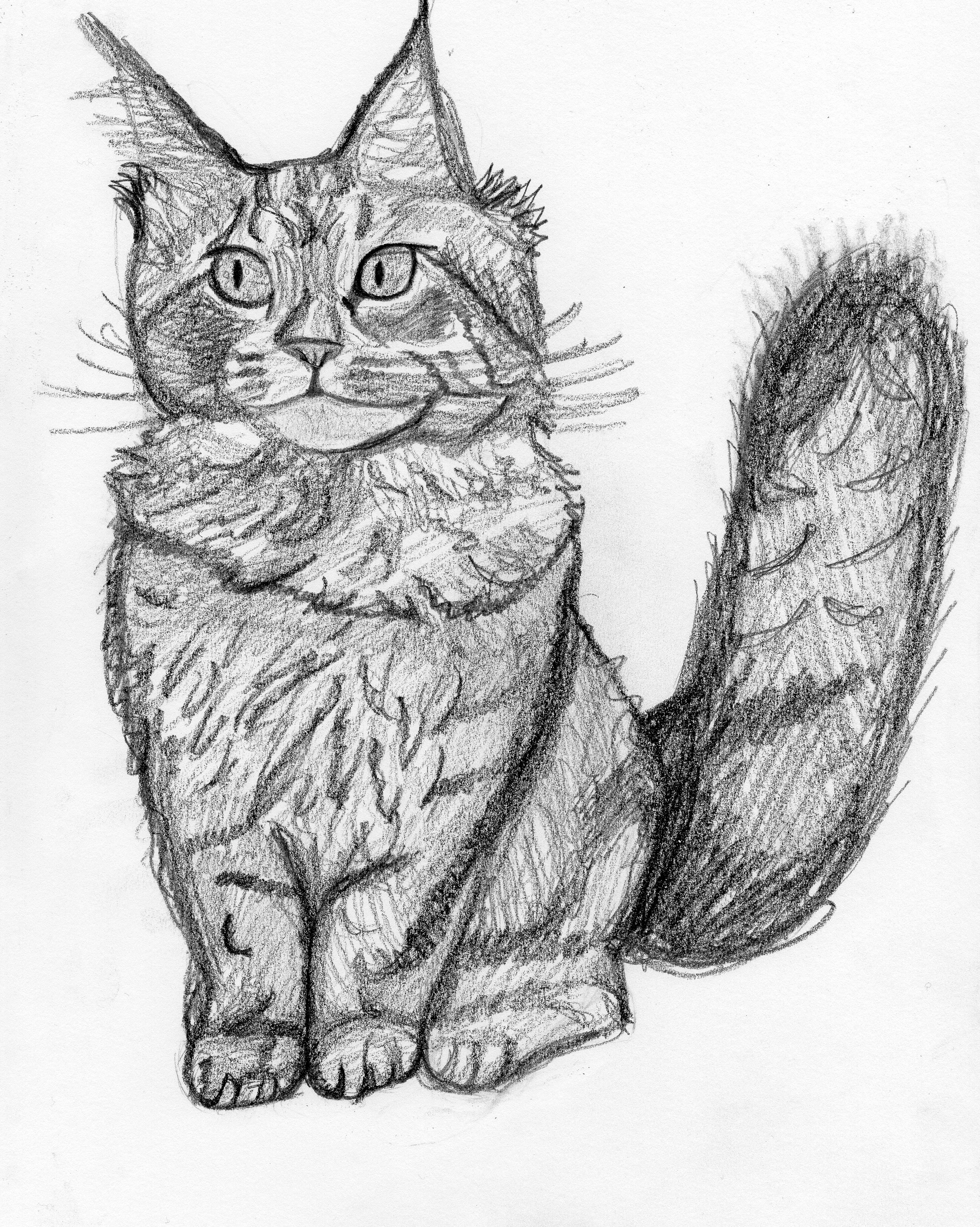 This Cat Sketch