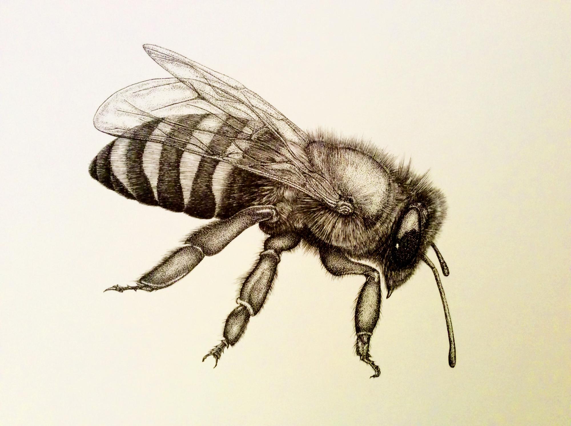 """""""Honey Bee"""" Drone"""