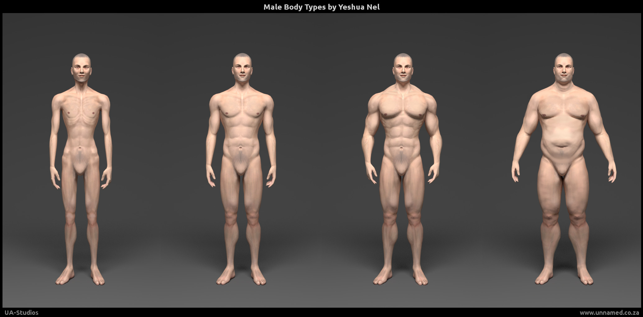 Male Body Types Eference