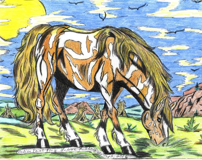 Indian Paint pony grazing