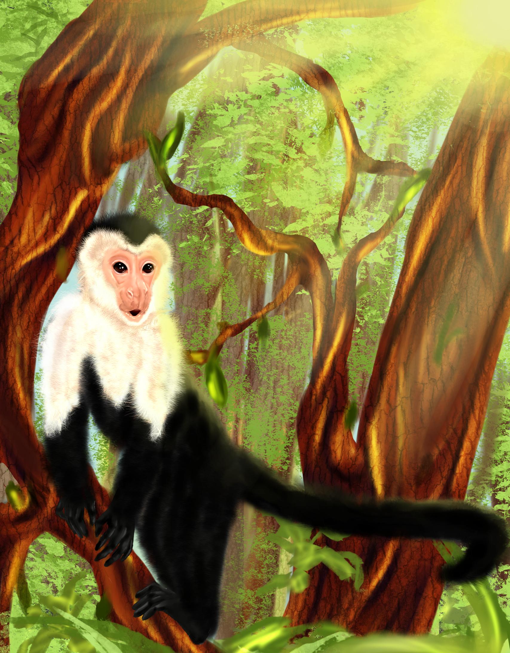 Sunlit Capuchin