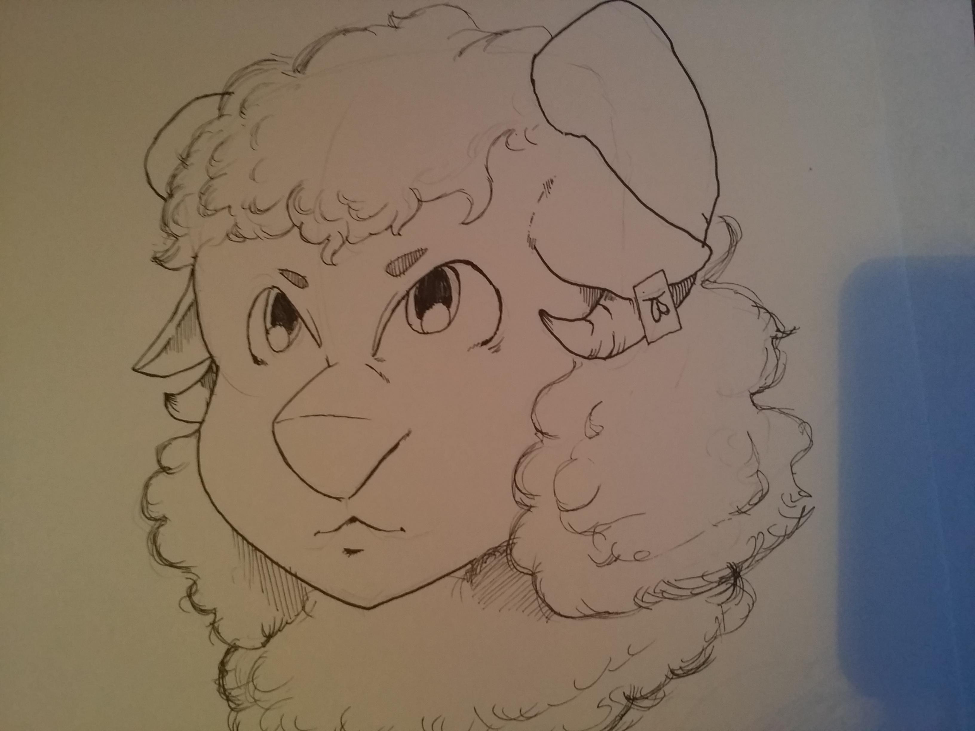 Sheep furry