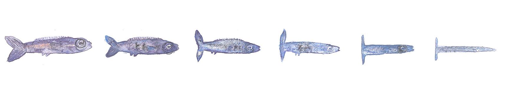 Transformation - fish III