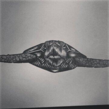 Hawaiian sea turtle (Honu)