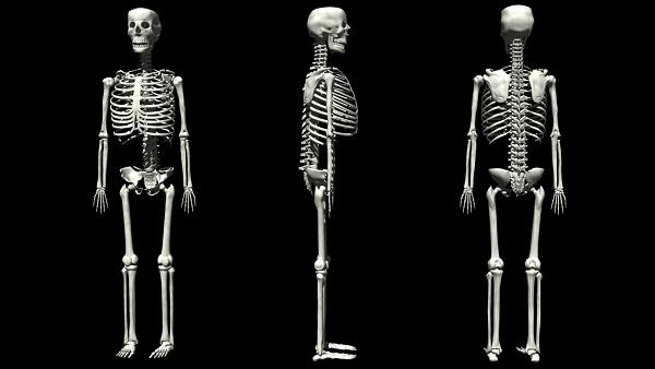 Anatomia Umana (Scheletro)