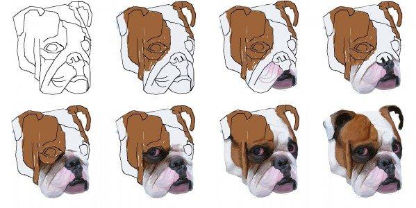 Bulldog Stages of Progress