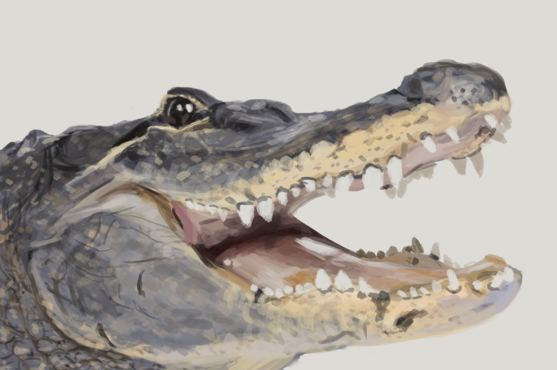 Gator study