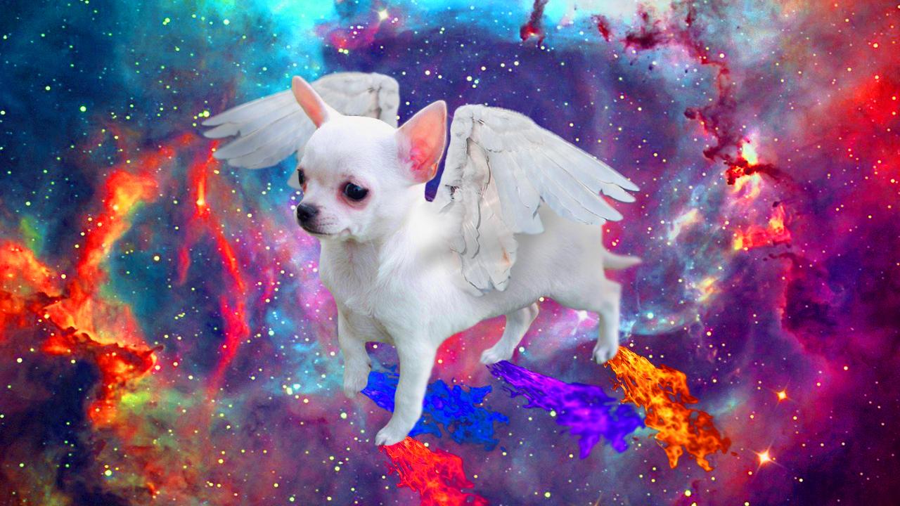 Francesco, Chihuahua of the Universe.