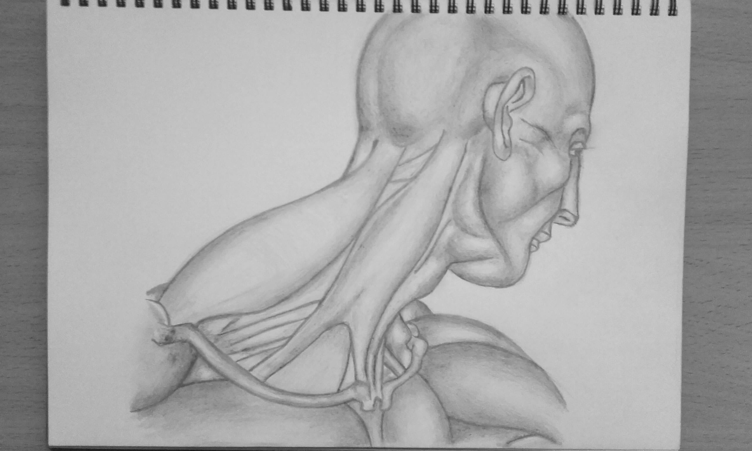 Anatomy #2