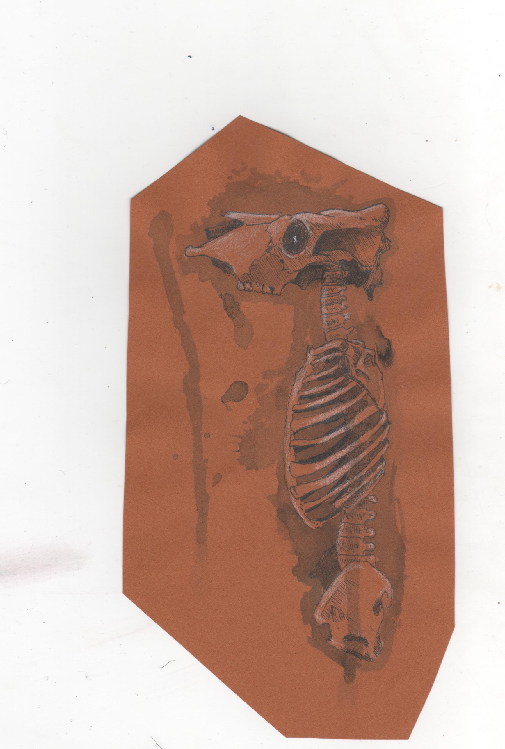 brown bones