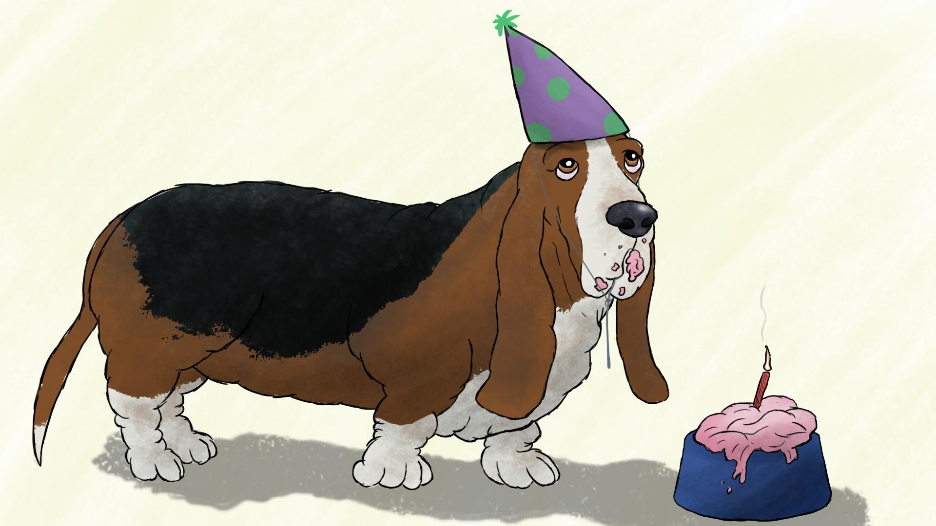 Birthday Basset Hound