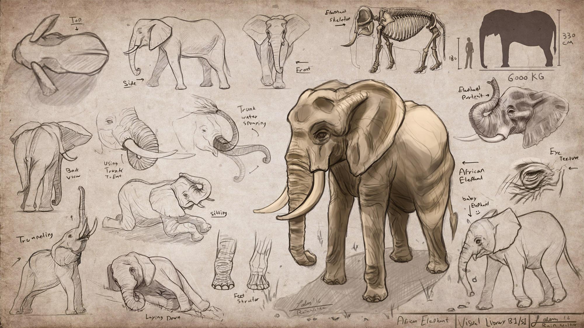 Visual Library Series - Animals - Sheet 1/100