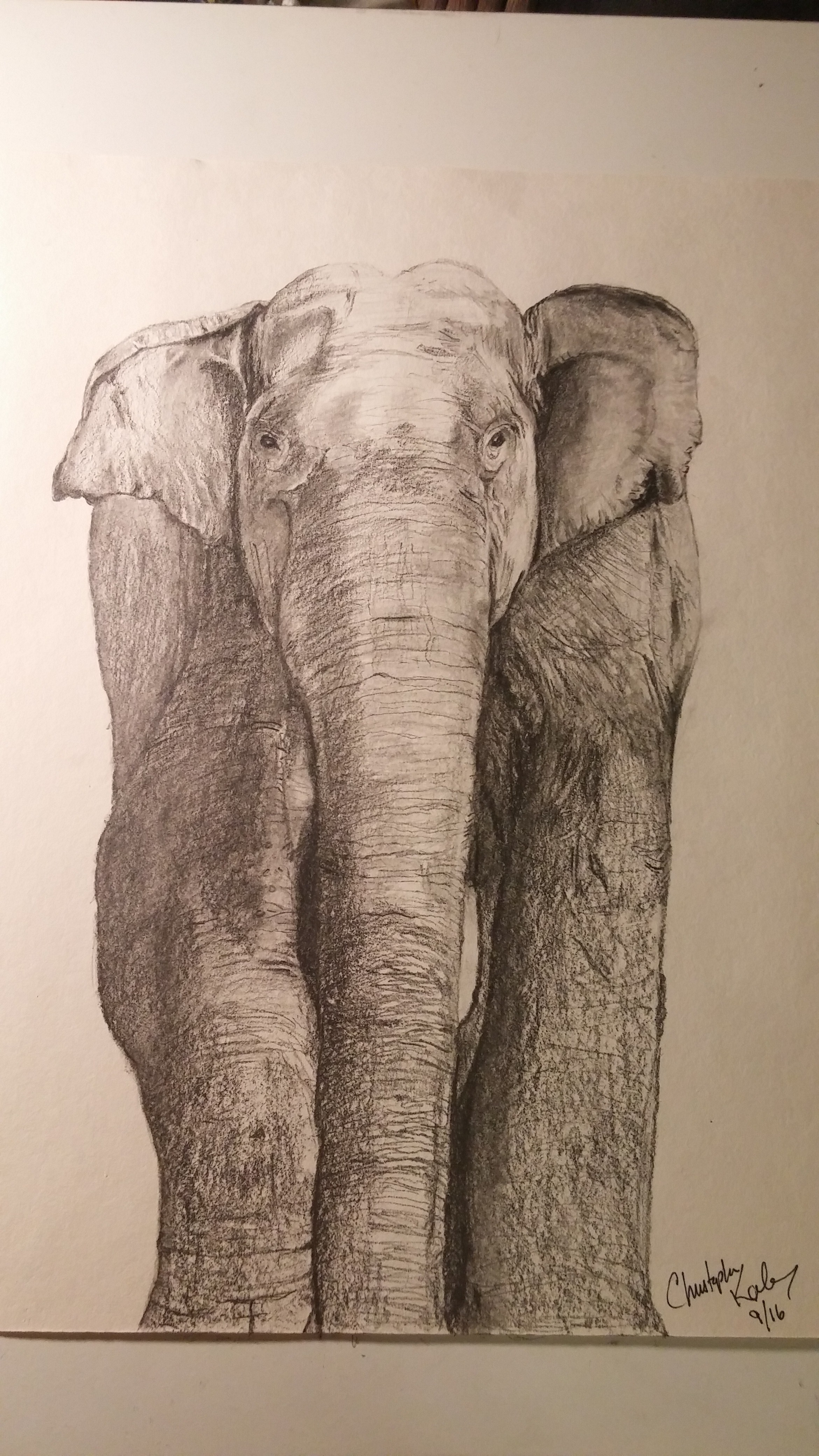 Elephant in pencil