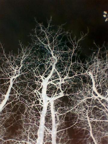 Earths veins
