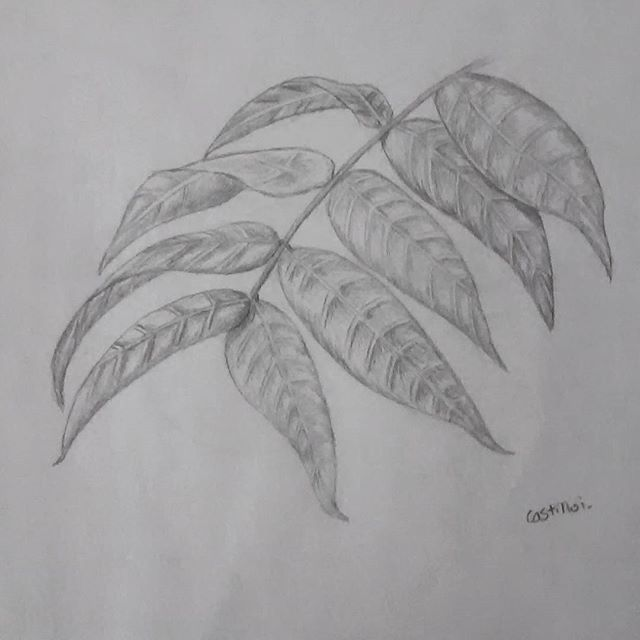 drawing of leafs