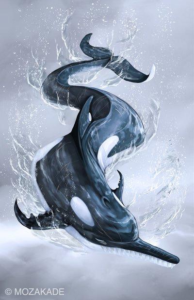 Orca Dolphin 2015