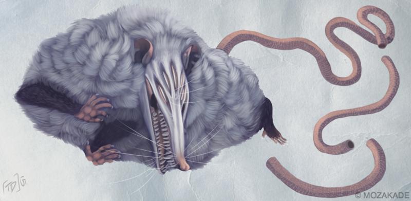 Opossum 2015