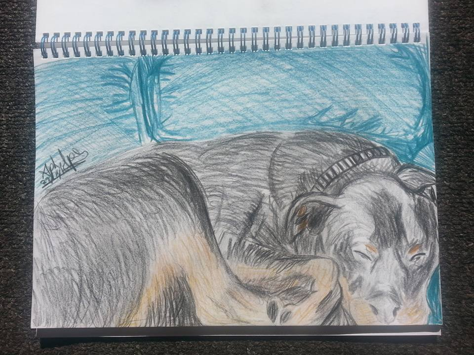 My Dogs Lazy Sunday - Coloured Pencil by April Phelps