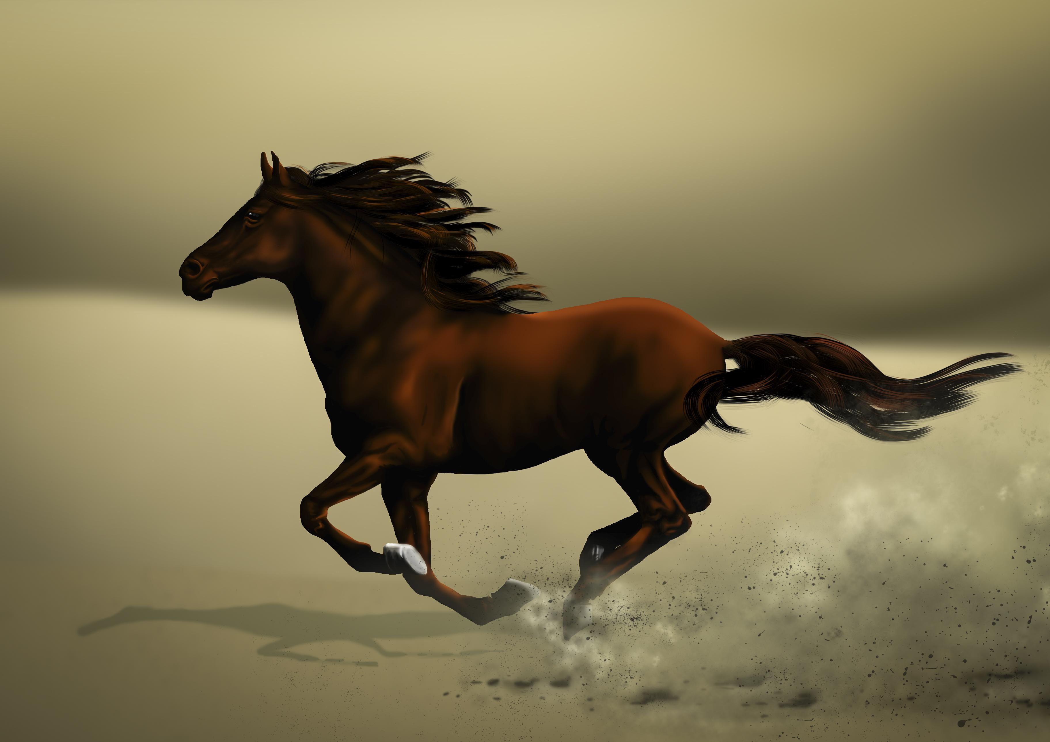 Desert Horse close-up