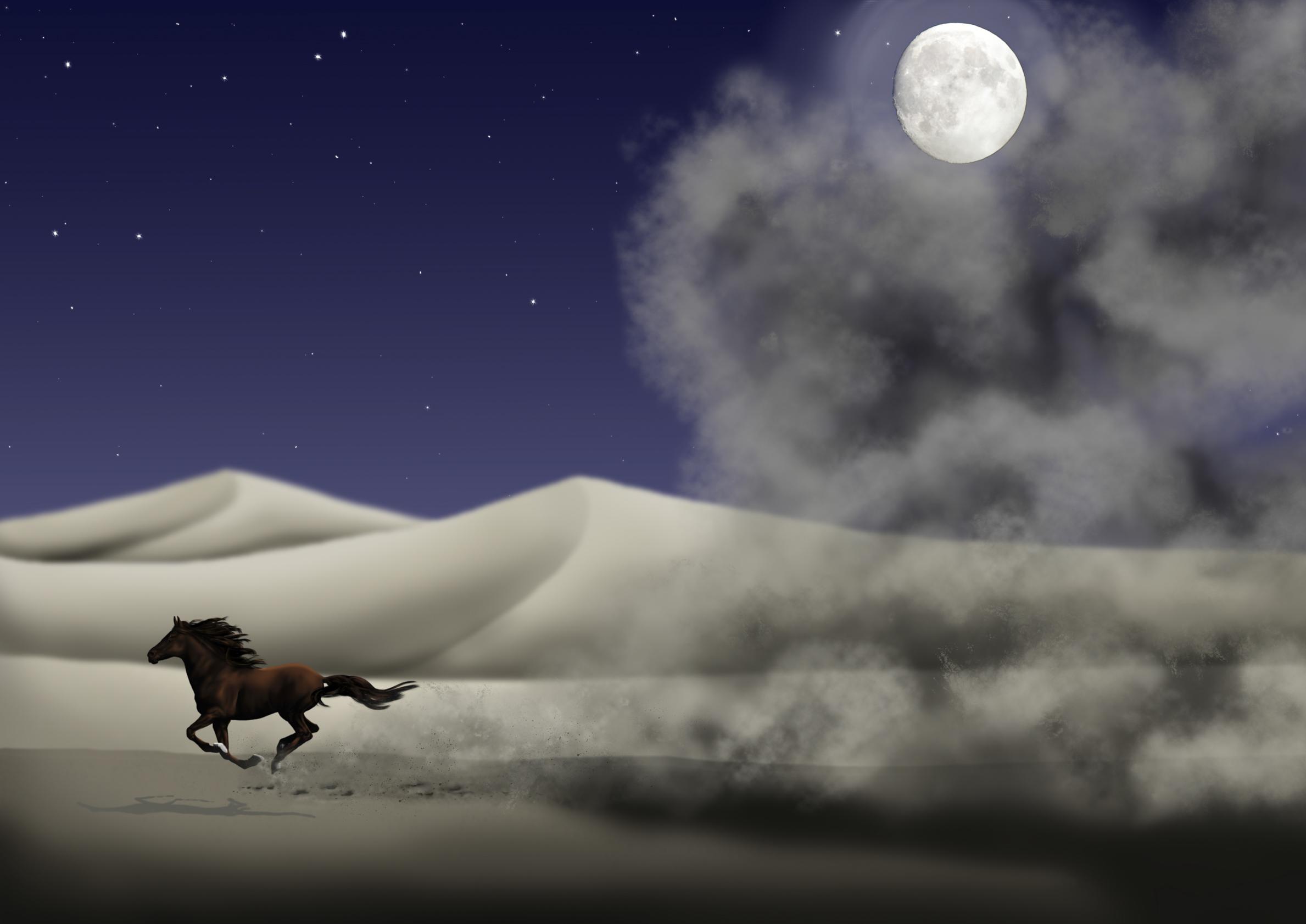 Desert Horse Night