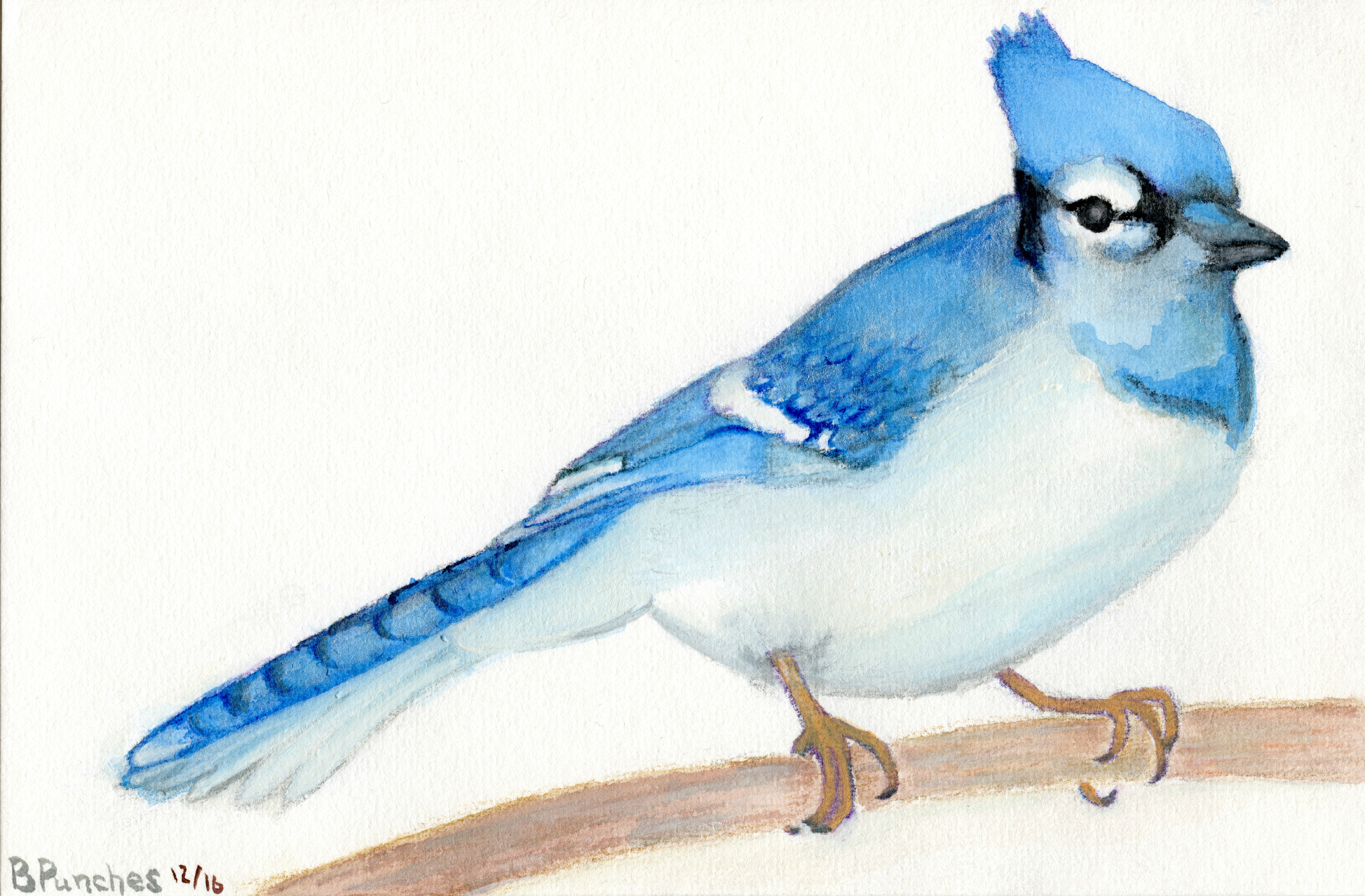 Blue Jay on Watercolour Block