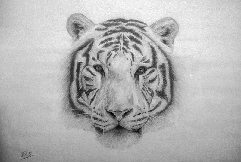 White Tiger Pencil Drawing