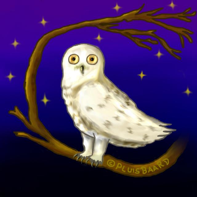 Hedwig (harry potter)