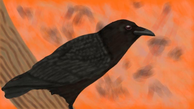 Crow life Drawing