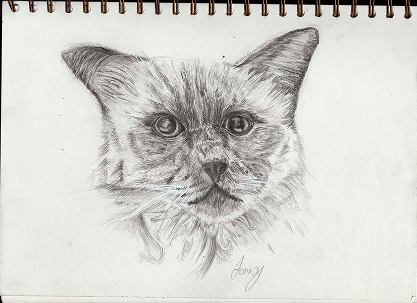 Cattywatty