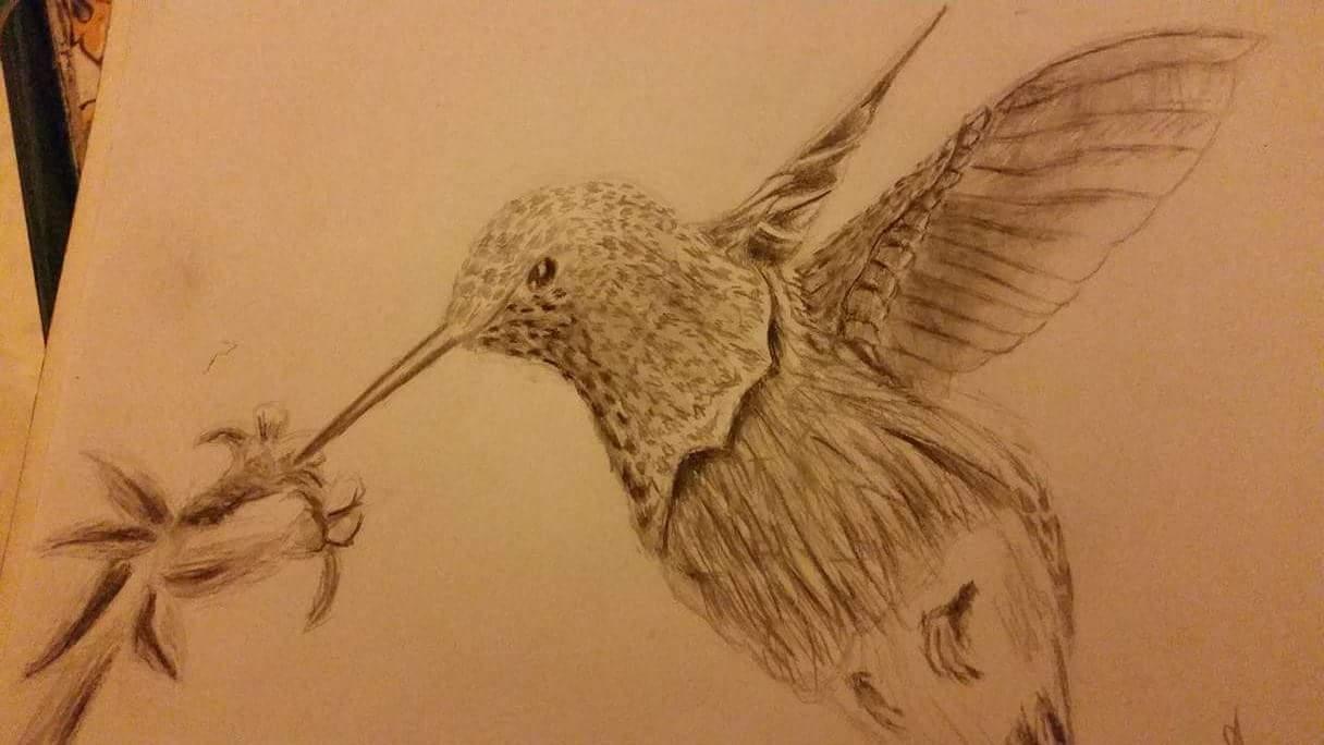 Colibri (black and white)