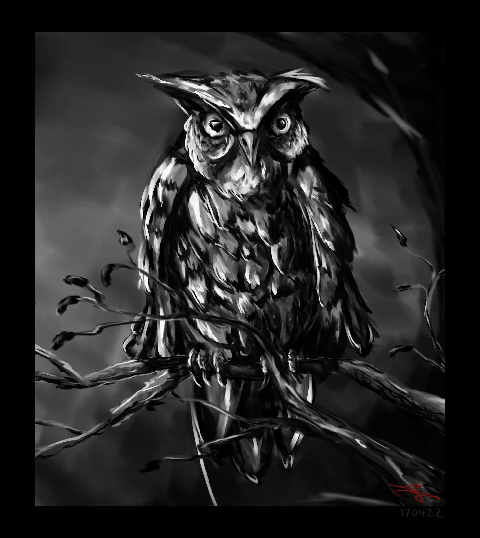 Owl 170422