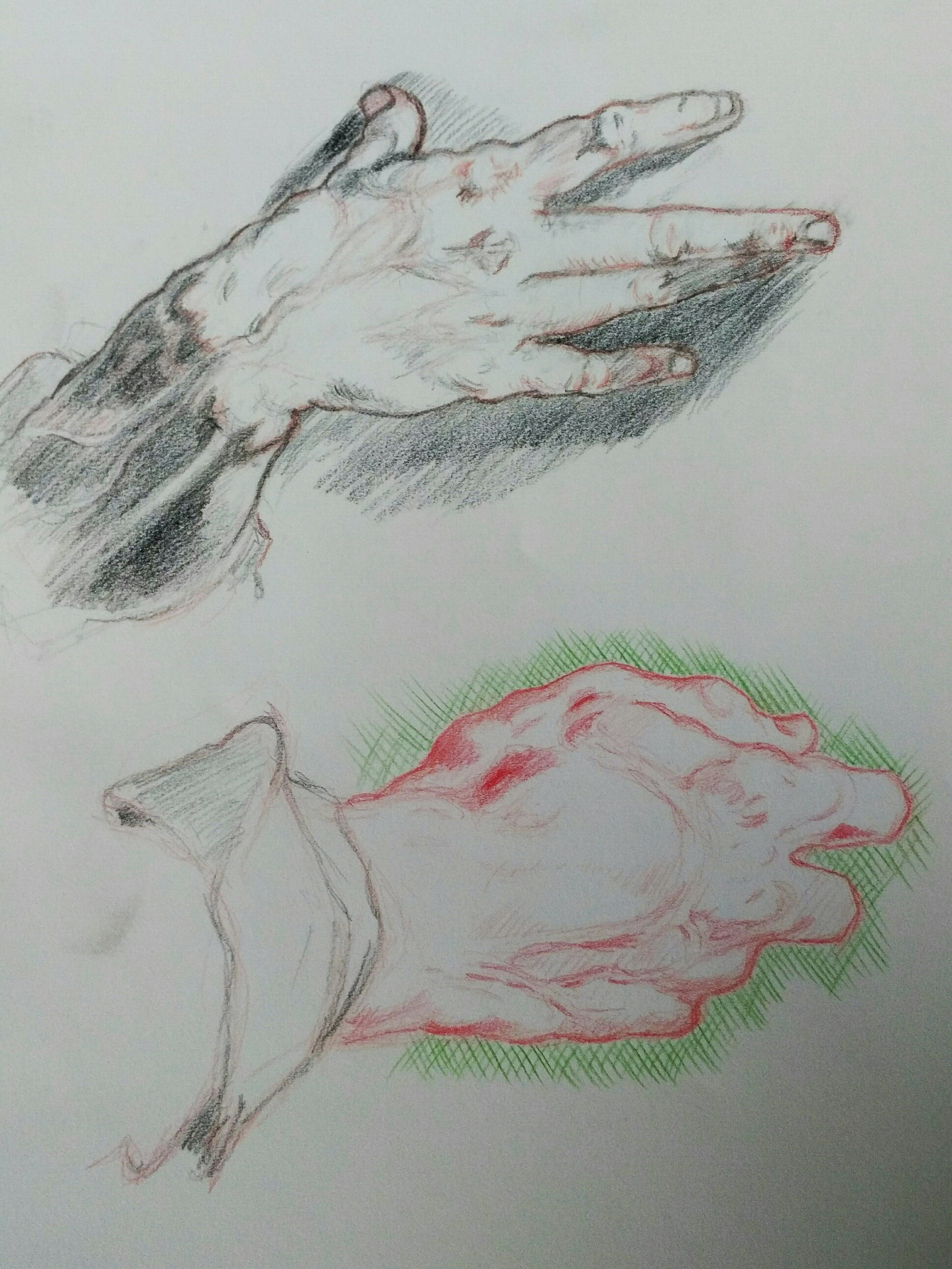 Goltzius hand study