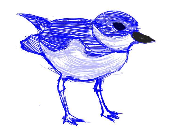 Small Bird Sketch