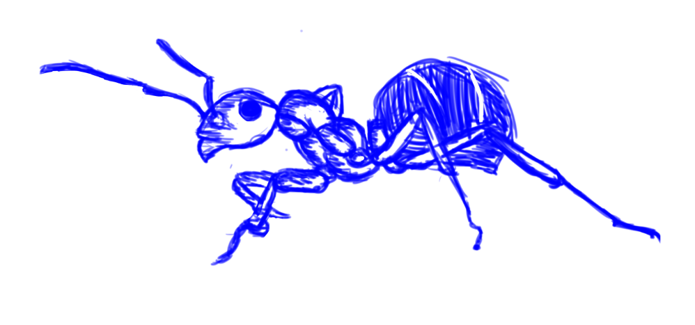 Ant Sketch