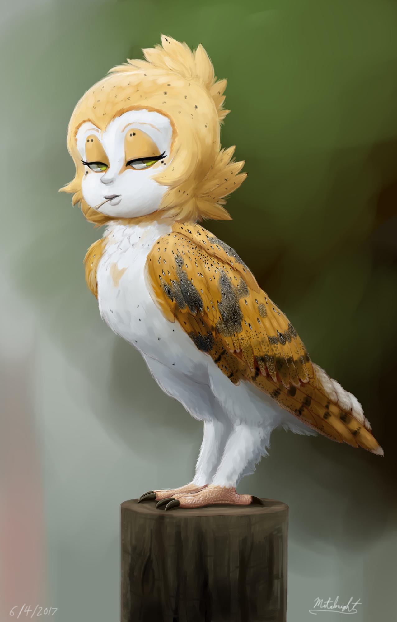 Barn Owl by Mataknight on Newgrounds
