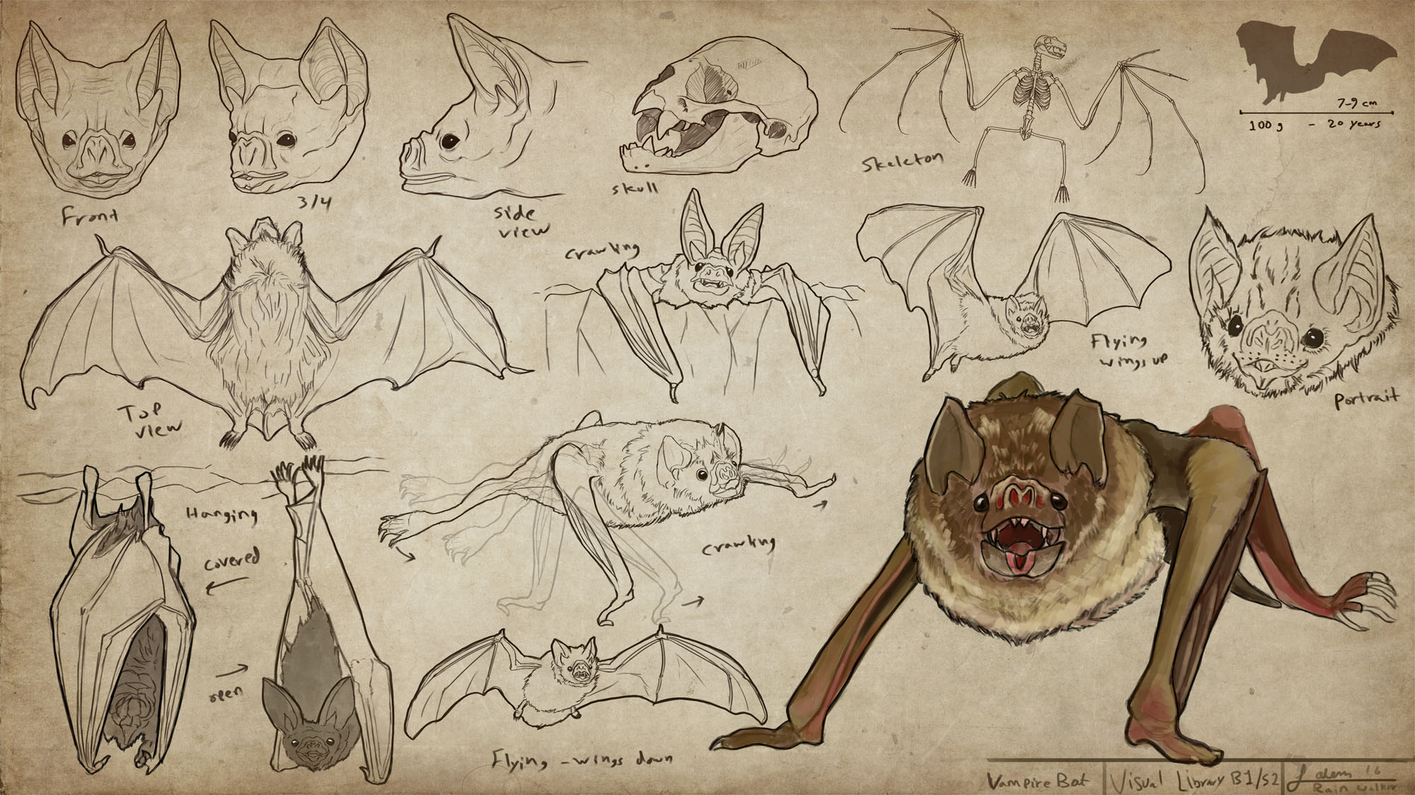 Vampire Bats - Visual Library Series - Animals sheet 2/100