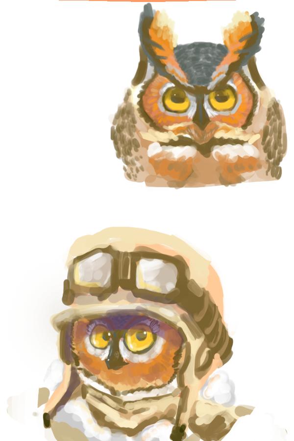 owl practice
