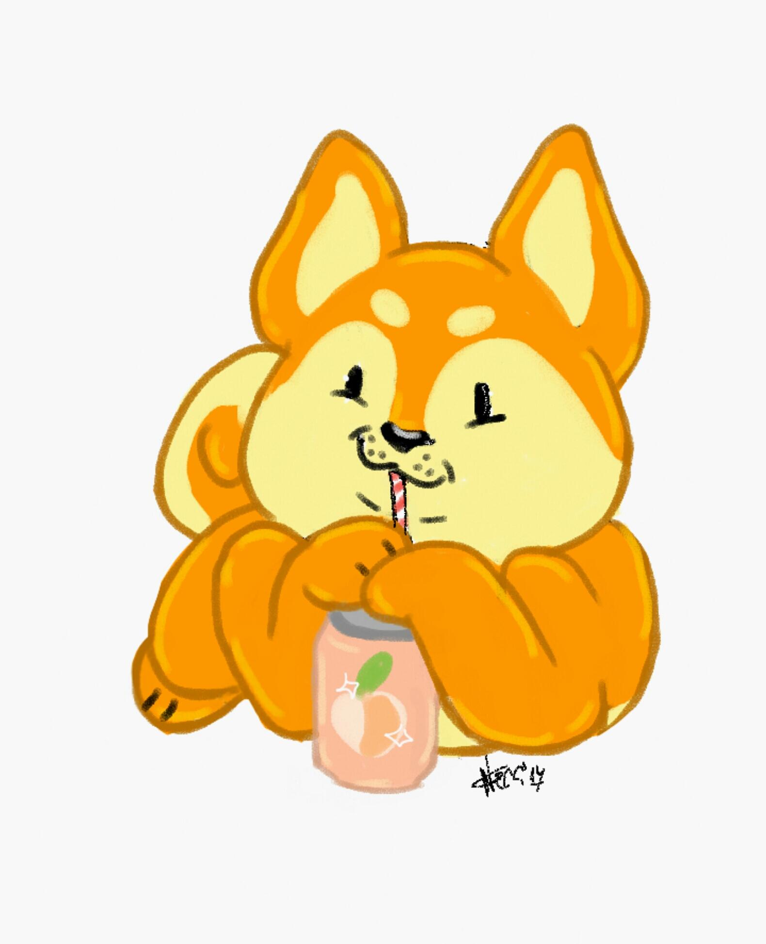 Shiba drinks juice