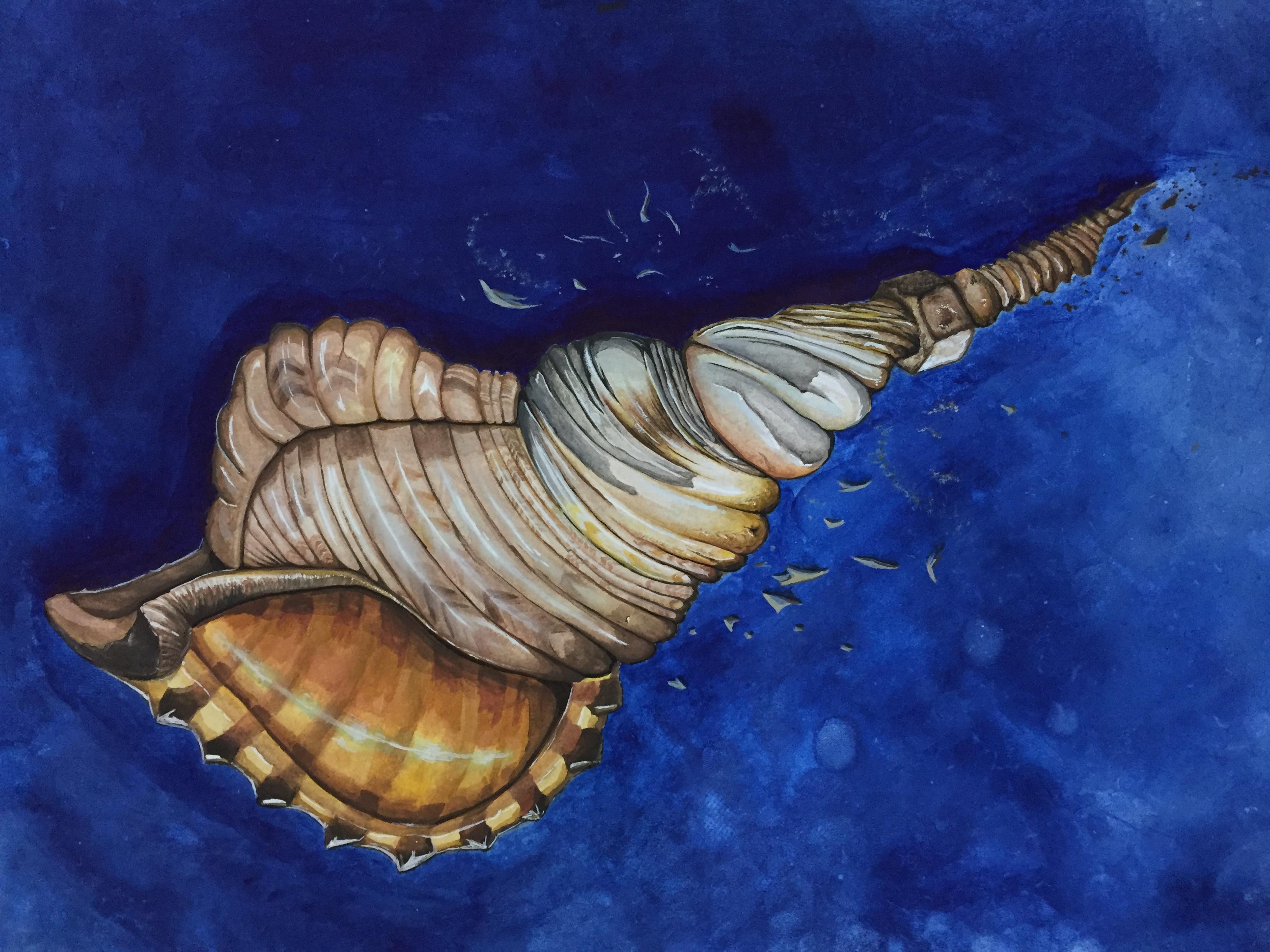 seashell + screw