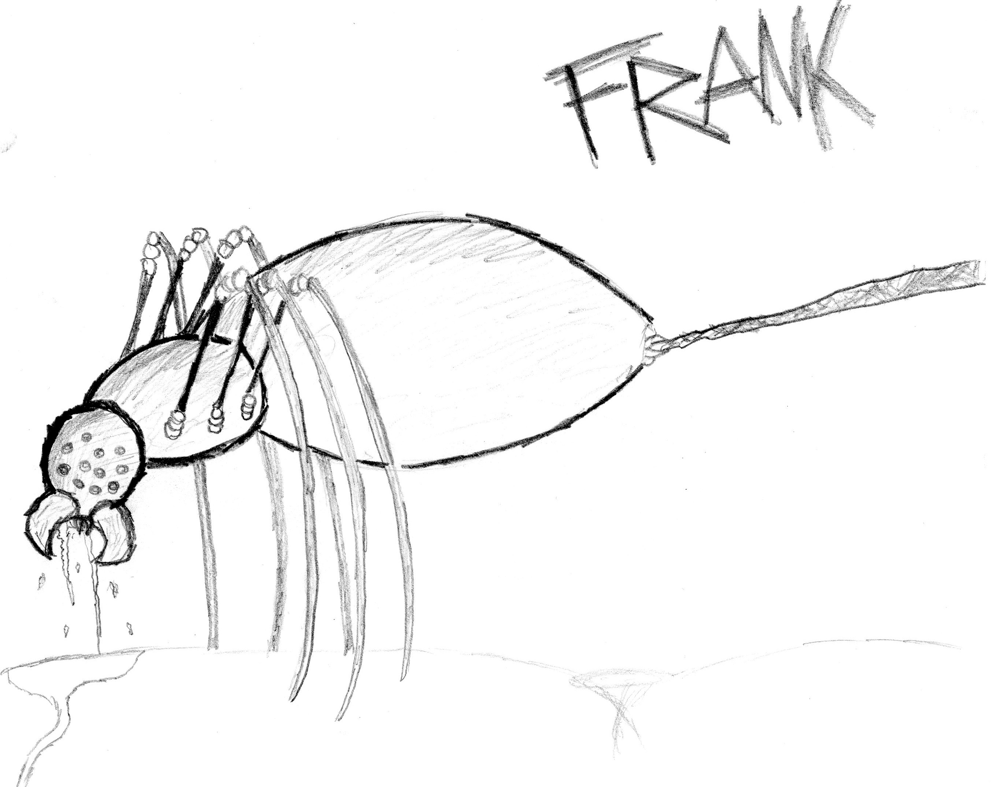 FRANK THE F@!#IN SPIDER
