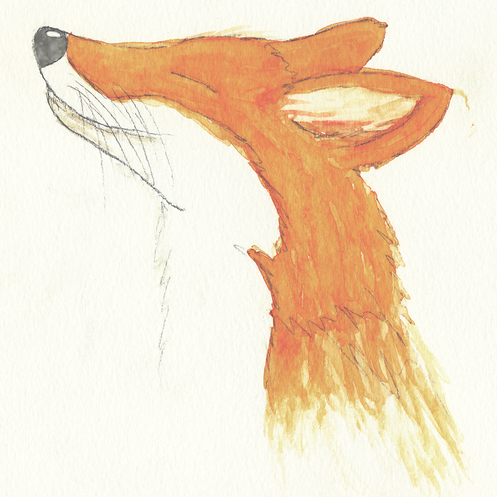 """Fox"" watercolor"