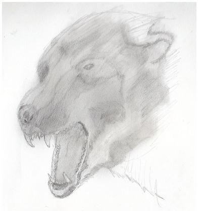 Bear Concept