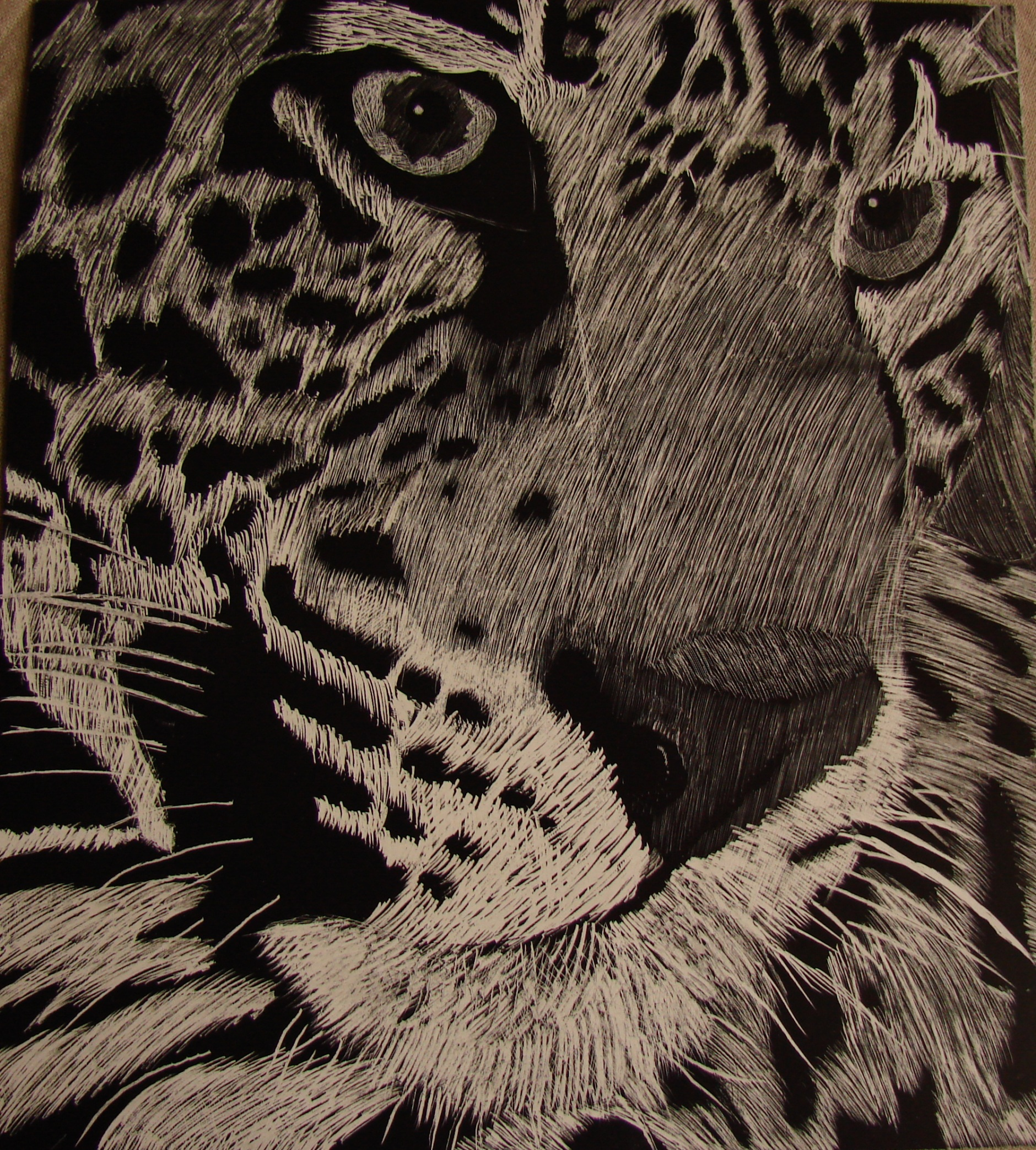 Scratched Tiger