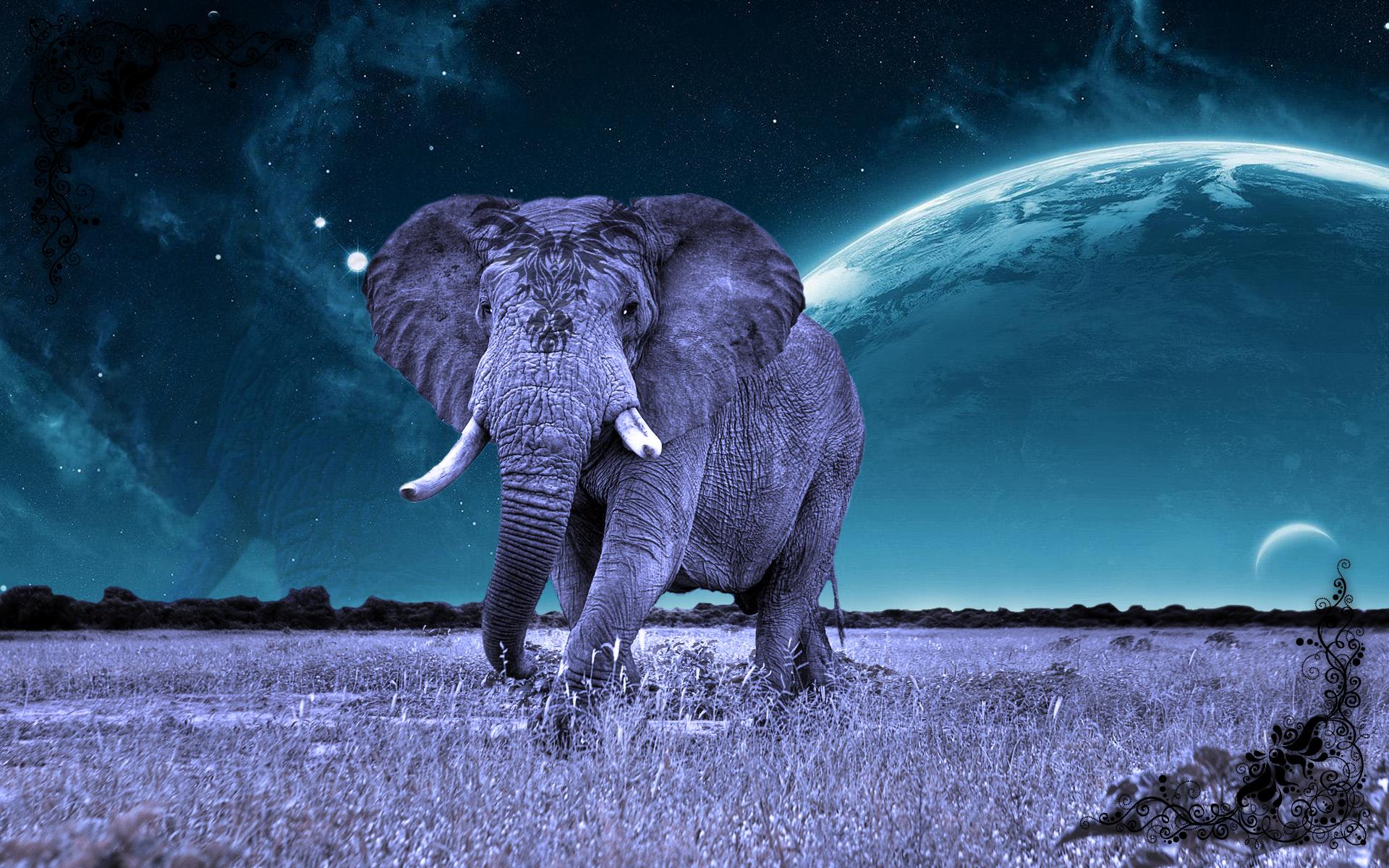 Cosmic Elefant