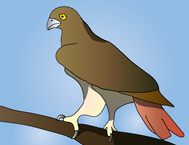 Red Tailed Eagal
